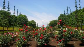 秋留台公园の写真