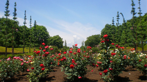 Akirudai Parkの写真