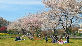 Higashimurayama-Chuo Parkの写真