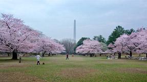 Hikarigaoka Park の写真