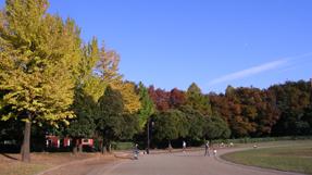 城北中央公園の写真
