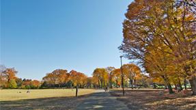 小金井公园の写真