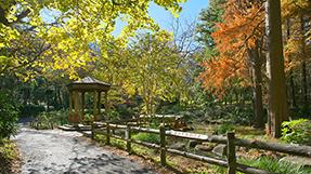 林試之森公園の写真