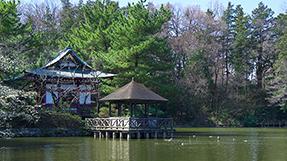 石神井公园の写真