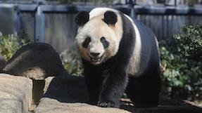 恩赐上野动物园の写真