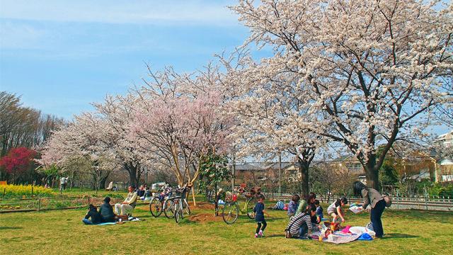 히가시무라야마추오공원