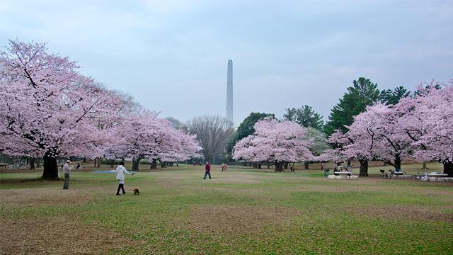 히카리가오카공원