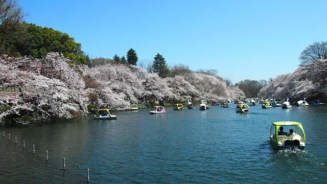 There Is Inokashira Pond In The Park, And This Area Serves As A Precious  Green Space For The Adjacent Residential Area.