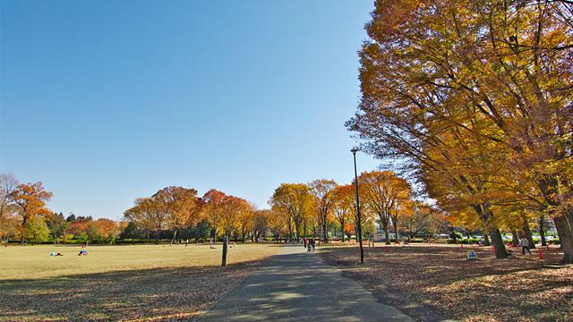 고가네이공원