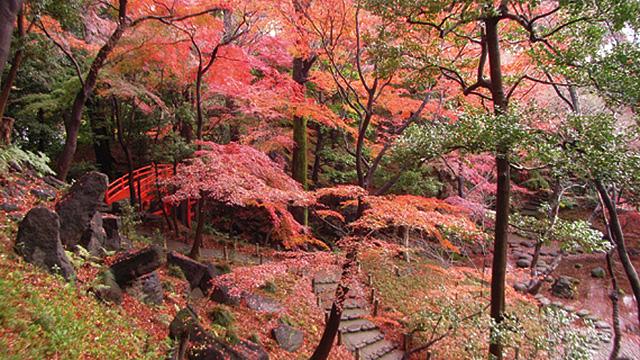 고이시카와 고라쿠엔 정원
