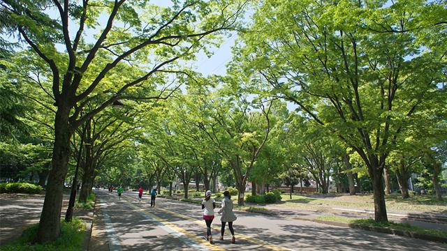 고마자와올림픽공원