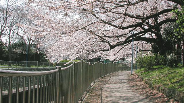 젠푸쿠지가와녹지(와다보리공원)